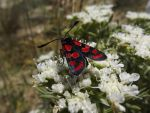 red and black butterfly by XAlessandraX
