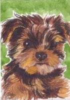 Yorkshire Terrier ACEO by carolinebradley