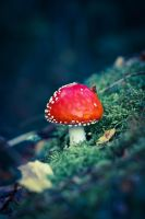 Toadstool 4 by BIREL