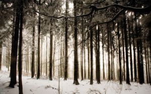 Winter Wood 2560x1600 by hermik