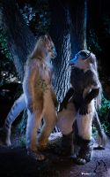 Nightly Encounter by FotoFurNL