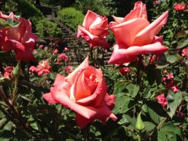 Lovely Pink by dragondoodle