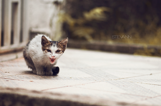 angry cat by StevaNN