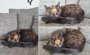 Tortoiseshell cat lifesize mount FOR SALE by DeerfishTaxidermy