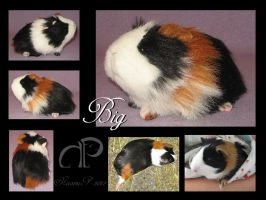 Custom Guinea Pig Plushie - Big by Morumoto