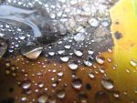 Like Sunspots or Raindrops by Theanimalparade
