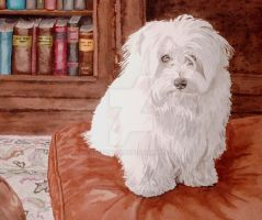 Coton de Tulear by RamonaQ