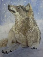 G: wolf in snow by Sonna-love