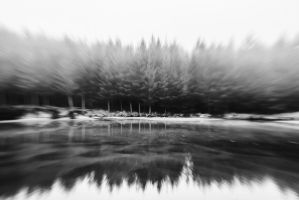 The Trees by lomatic