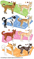 Canaan dog adoptables_CLOSED by Aquene-lupetta