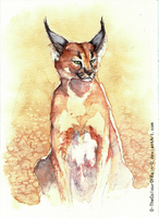 Caracal Portrait by Heyriel