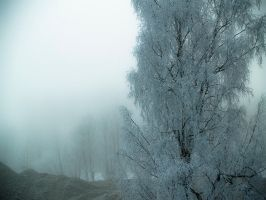 Fog on winter morning by Acdnoodles