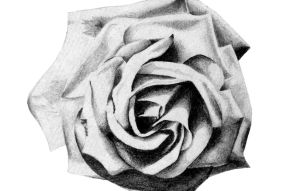 Rose Pencil drawing by CHMInteractive