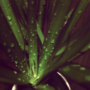 waterdrops_ by Gamodox