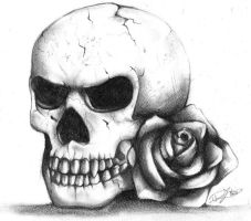Skull and Rose by Ruolina