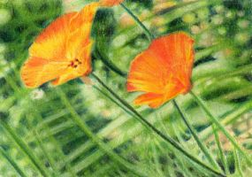 SOLD - Drawn to Help 4.1: Escholzia by theperian