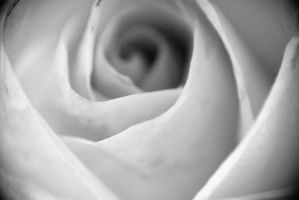 The Heart of a Rose by humanoid1