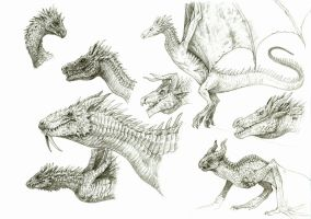 Dragon Sketches 3 by eoghankerrigan