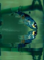 Blaise by eulalievarenne
