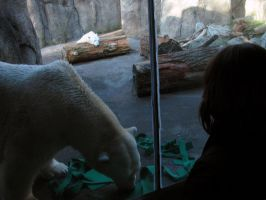 Polar Bears at the Oregon Zoo1 by Cyberpriest