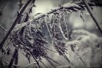 Ice tree by Muskaan13