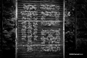 Plant as Chinese Typeface by sarthahirah