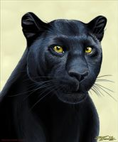 Panther.TrueBlue.Szekeres by Jozef-Szekeres