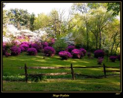 To Brighten the Day by David-A-Wagner