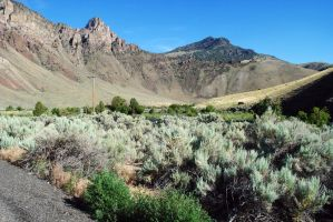 Sagebrush and Mountains by morbiusx33