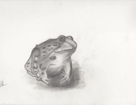 Frog by Taylora001