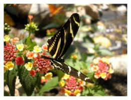 Another Butterfly by Sugargrl14