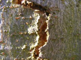 split bark by rev-jesse-c-stock