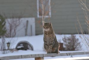 Cat - 2 by Silver-Stock-Images