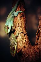 Reptiles by Knask