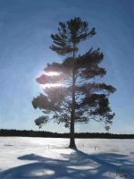 The Pine by S734L7H