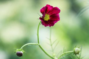 From The Garden 10 by Pablo-Toledo