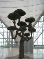 thai bonsai by two-ladies-stocks