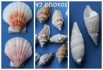 Sea shell Stock PACK by Malleni-Stock