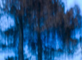 Blue Trees by inacom