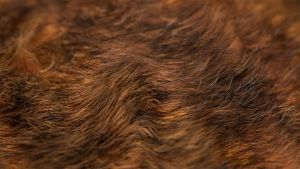 Animal Hair Macro by CG-Geek