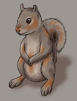 Squirrel by naught101