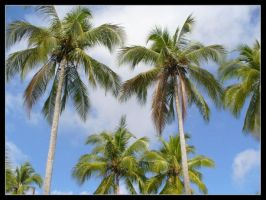 Palm Trees in Costa Rica by MyriamRockGirl