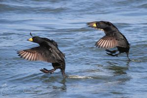 Synchronized Landing by mydigitalmind