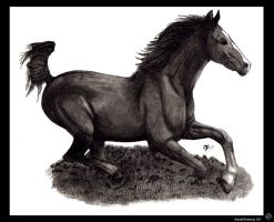 -.Horse.- by Aave