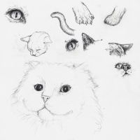 Cat Study by ParaIsBack