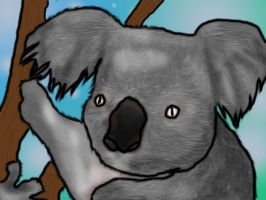 KOALA by Joyose