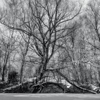 Tree at the Frozen Pond by vamosver