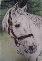 Harry- horse portrait pen and pencil by lucx91