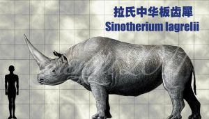 Sinotherium lagrelii by sinammonite