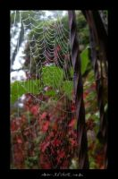 wet web by ad-shor
